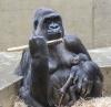 Dritte Gorilla-Geburt seit Weihnachten in der Wilhelma